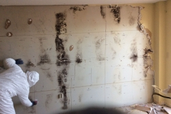 charleston mold removal